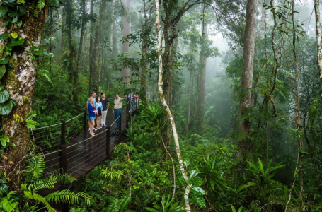Paradise Within A City: Find Out Why Cairns Is Perfect For Those Who Loves Outdoors